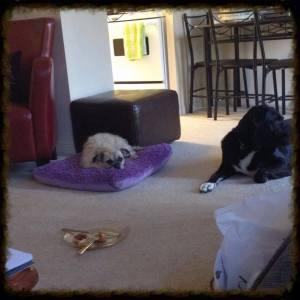 Dogs Food floor